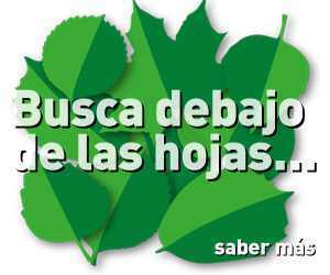 BASES DEL PROGRAMA DE PUNTOS INAPA GREEN